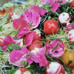Kathy Kolibry - Salade jolie Fleurs Ciboulette Radis Graines germées